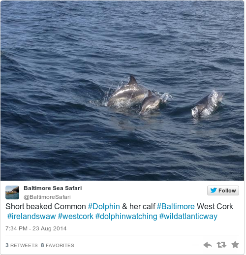 Cut Up Your Six Pack Rings Warns IWDG After Dolphin Death In Cork - These six pack rings feed sea creatures rather than harm them
