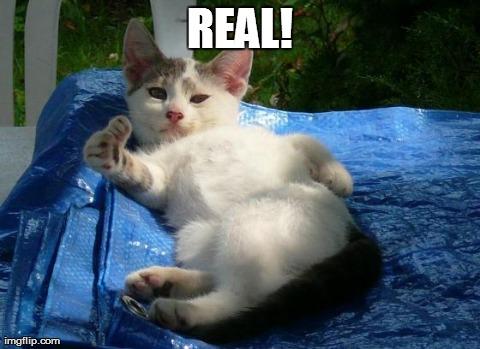 Morrissey Cat Meme