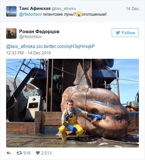 Tweet by @Роман Федорцов