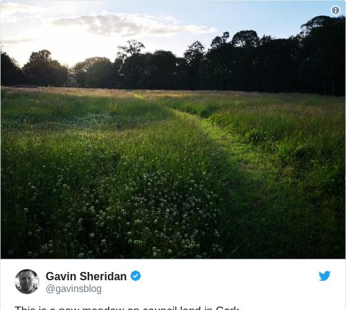 Tweet by @Gavin Sheridan